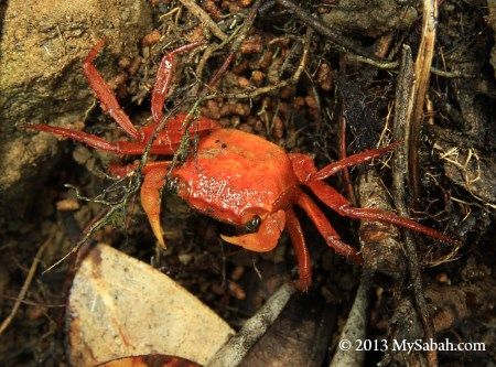 Silam Crab