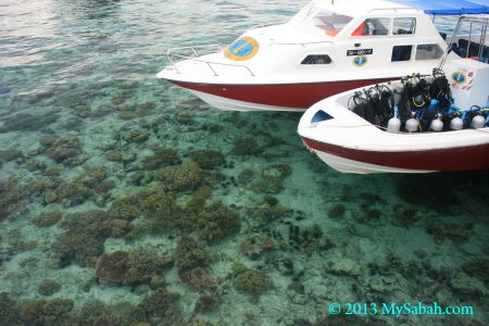 corals of Mabul