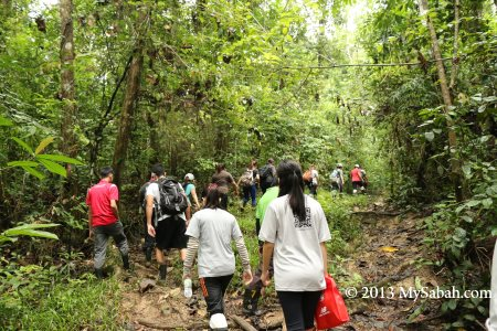 jungle trekking in Tabin forest
