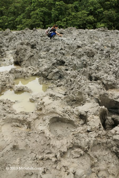 animal tracks at mud volcano
