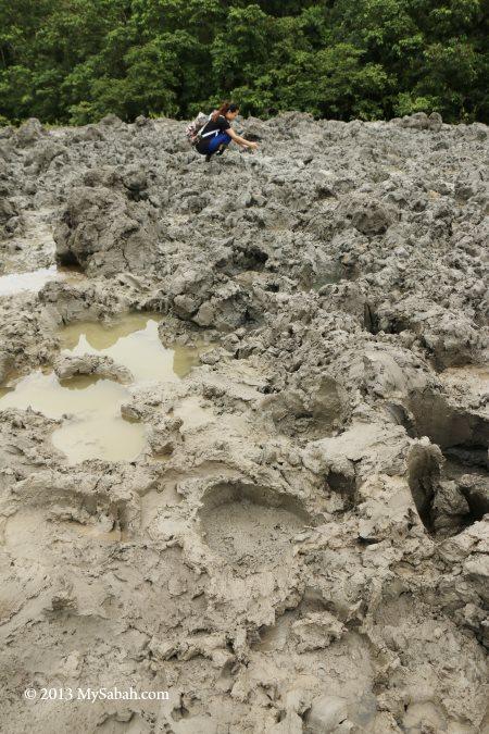 animal tracks at mud volcano