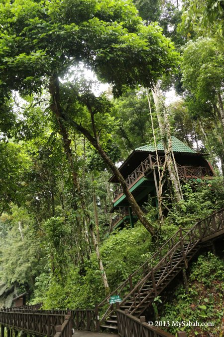 Hill Lodge of Tabin Wildlife Resort