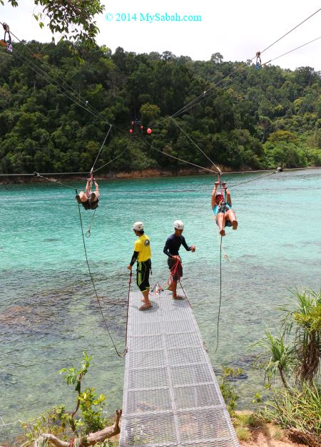 flying fox in Sapi and Gaya Island