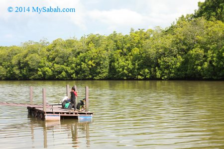 fishing in mangrove