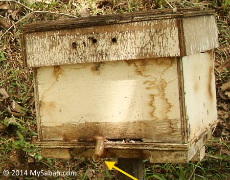 stingless bee hive