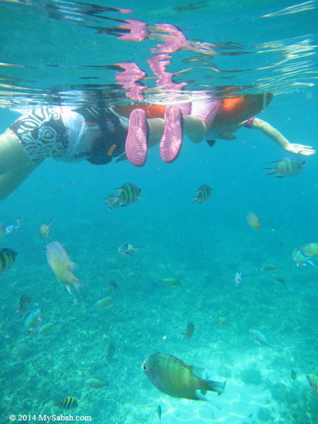 snorkeling in the sea of Mengalum Island