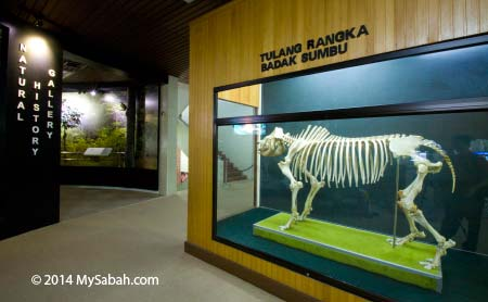 Natural History Gallery of Sabah Museum