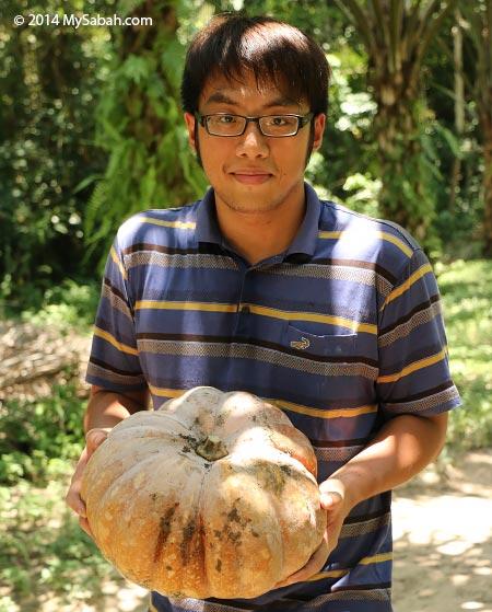 big pumpkin