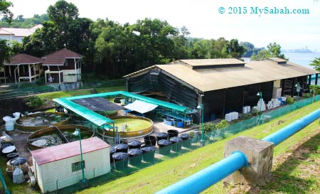 finfish and shrimp hatchery