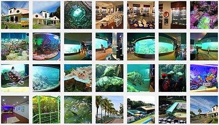 photo album of UMS Aquarium & Marine Museum