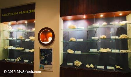 hard corals exhibition