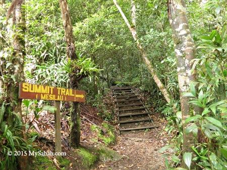 summit trail from Mesilau