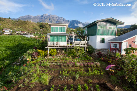 Mt. Kinabalu and garden of Little Hut