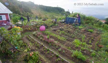 little farm in Little Hut