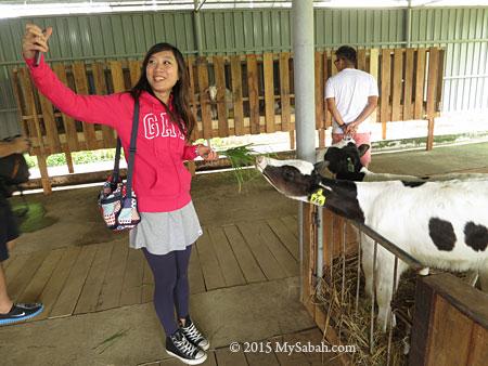 selfie with calf