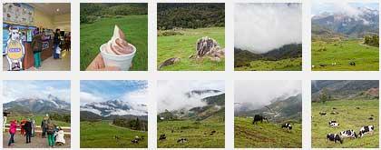 photo album of Desa Dairy Farm