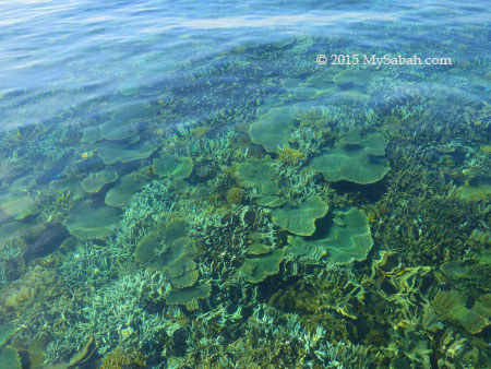 corals in the crystal clear water