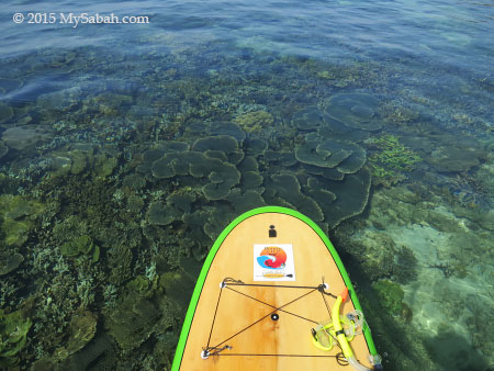 view of corals from Stand Up Paddle Board