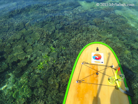 Corals of Sapi Island