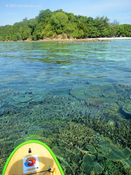 corals and Sapi Island