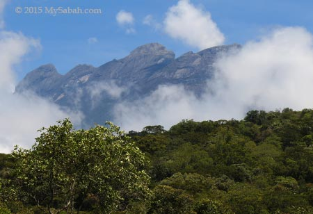 Mount Kinabalu and forest