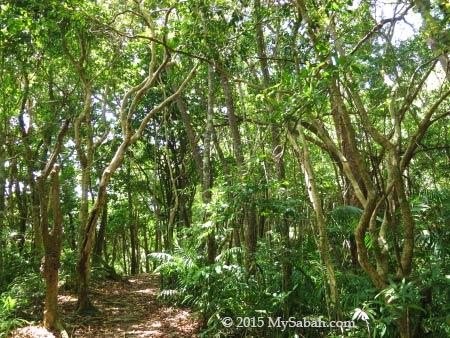 island forest of Sapi