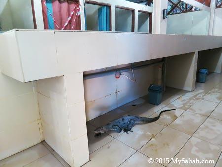 monitor lizard in toilet