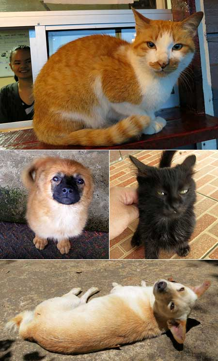 dogs and cats of Kundasang