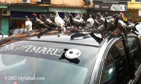 pigeons on the car
