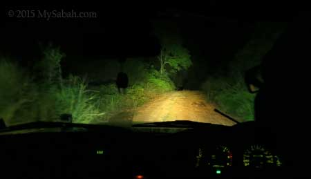 night safari on 4WD