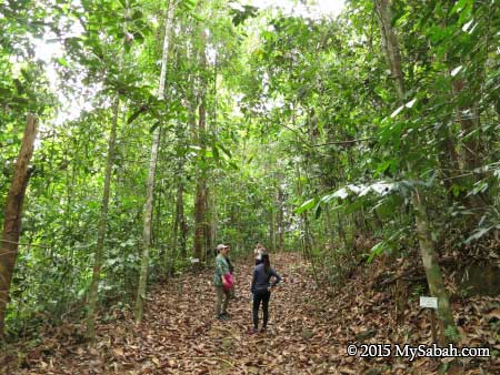 jungle trekking in Deramakot
