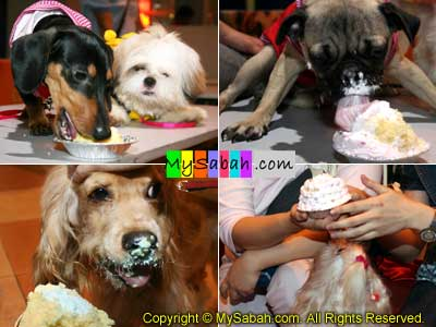 Dogs eating cake