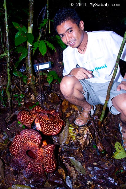 twin blooming of rafflesia