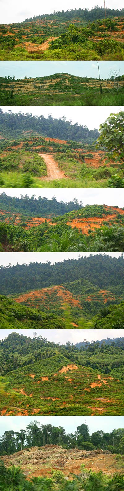 Hill clearing for Oil Palm plantation