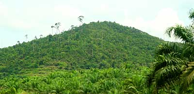 Forest reserve surrounded by Oil Palm