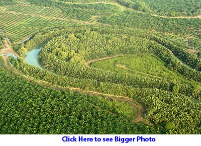 Small forest surrounded by oil palm