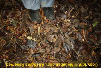 deep layer of leaves