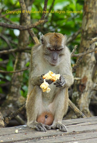 Food for Monkey