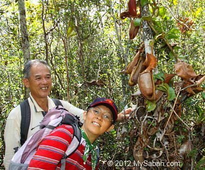 pitcher plant in Maliau Basin