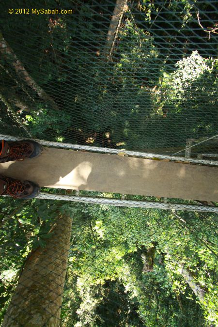 look down from Canopy Walkway