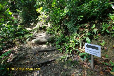 trail to Canopy Walkway of Poring