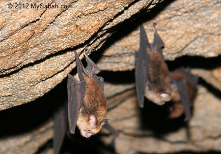 Bats clinging on wall