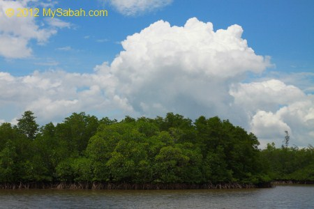 mangrove forest and river of Borneo Kelly Bays