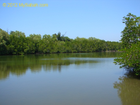 mangrove forest and river of Kelly Bays