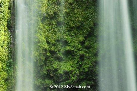 waterfall and green moss