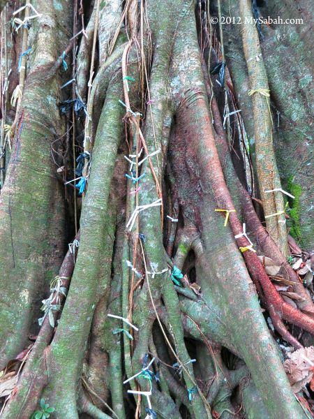wishing ribbons on tree root