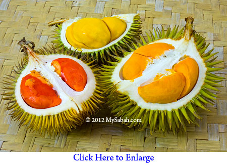 durians in 3 colors
