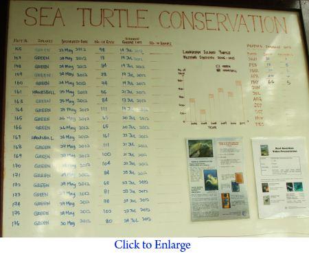 turtle nesting statistics
