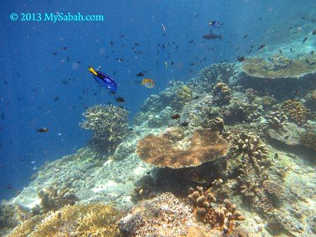 corals of Sipadan
