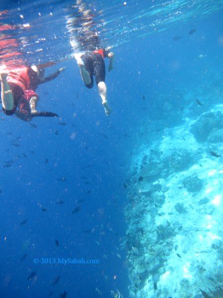 snorkeling in Pulau Sipadan